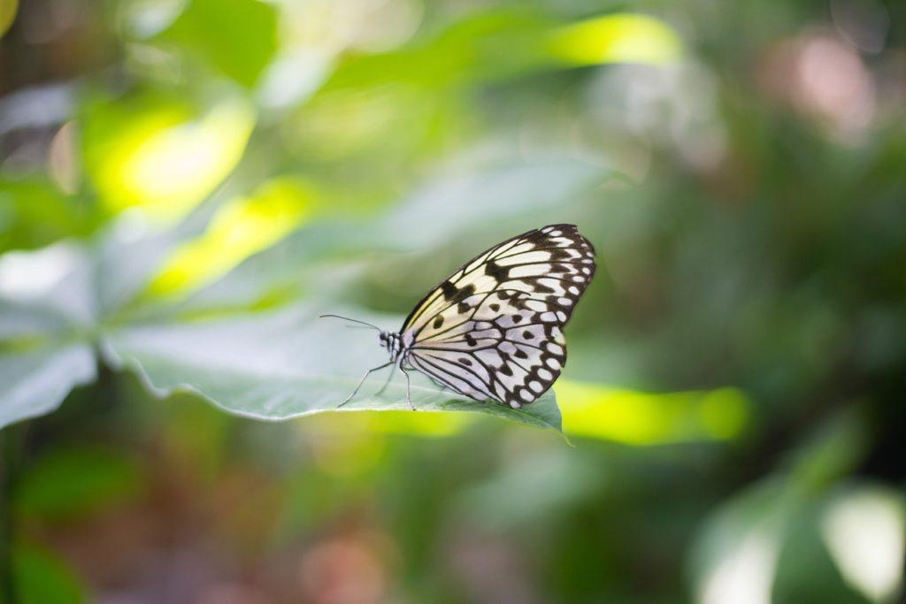 Imagen de mariposa